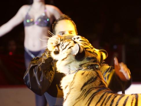 cirque2013